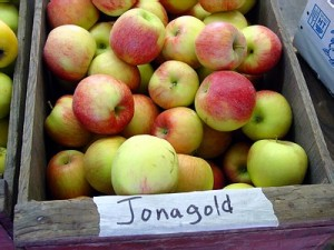 apples_jonagold