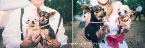 wedding portraits with pets, how to include pets in the wedding day