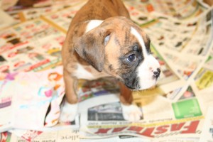 straight out of camera image, boxer on newspaper